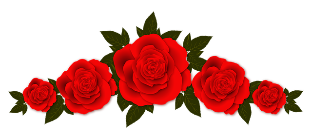 Red Rose Best Images