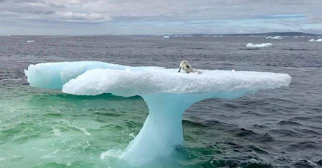 Дрожа всем телом, он сидел на тающей льдине…Ох и удивились рыбаки, узнав, кто нуждается в помощи!