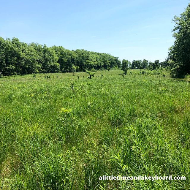 The prairie opened up before us as we emerged from the forest at Severson Dells