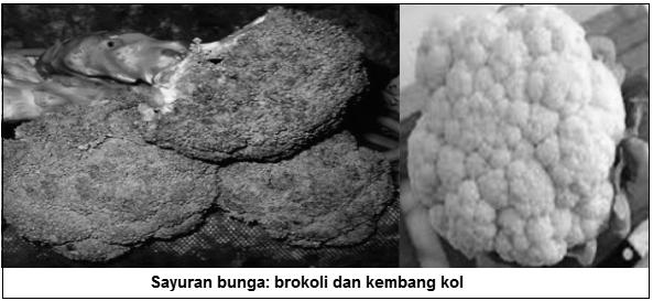 Sayuran bunga - brokoli dan kembang kol - Sayuran bunga (flower vegetables) - Jenis Sayuran Berdasarkan Bagian Tanaman yang Dimakan