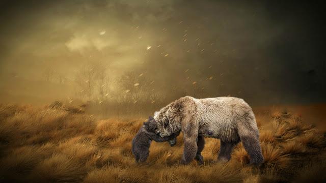 صور الدب وامة خلفيات حيوانات