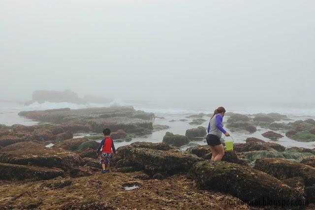san diego, la jolla, shell beach, tidepooling