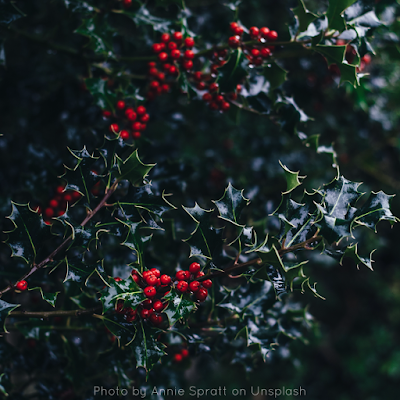 Christmas In Mexico Vs The UK - Holly Leaves And Berries