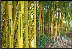 Kerajinan dari bambu | Kerajinan bambu murah | Kerajinan ...