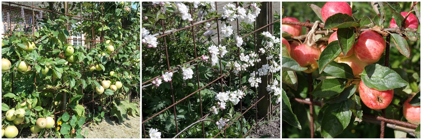 Havehjernen: Æble espalier   dos and don'ts