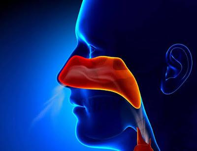Loss of smell sensation