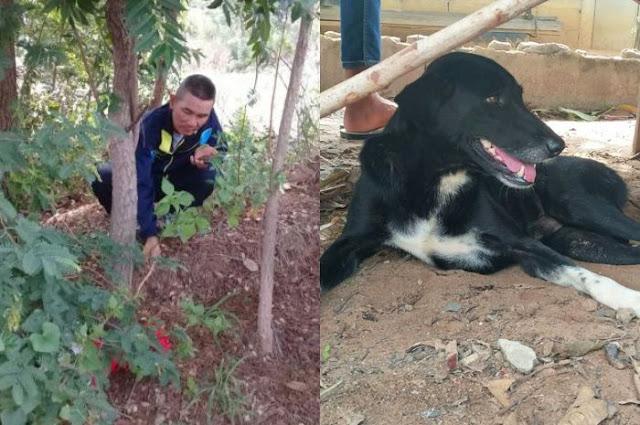 Anjing Lumpuh Ini Berhasil Selamatkan Bayi yang Dikubur Hidup-hidup oleh Ibunya Sendiri
