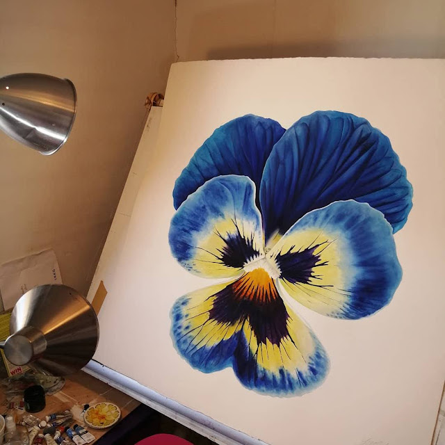 Giant Pansy Watercolour