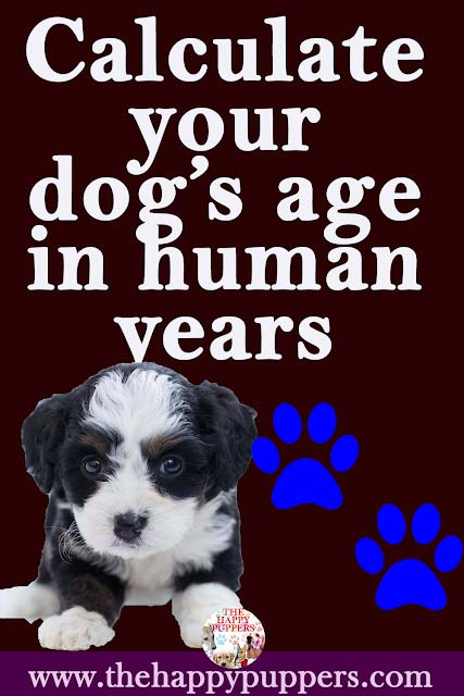 Calculate your dog's age in human years