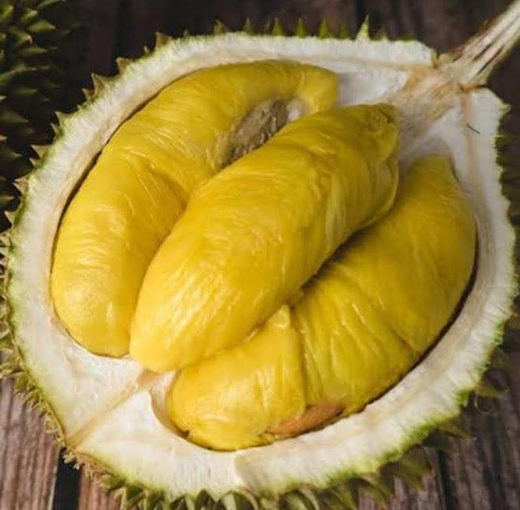 Bibit Durian Musangking Asli Bibit durian okulasi Sumatra Utara