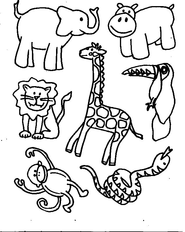 jungle animals  Zoo Animals