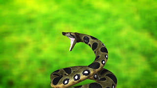 Anaconda Snake Information in Hindi