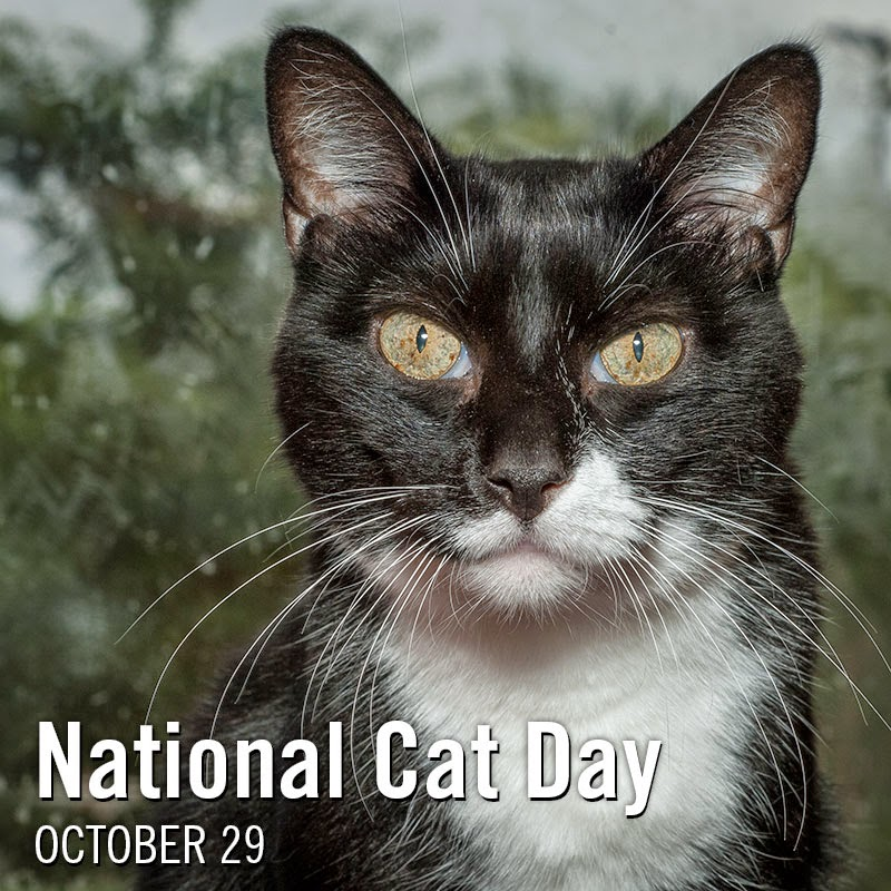 Feline Rescue Cat Tales National Cat Day Is October 29