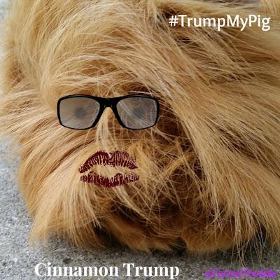guinea pig dressed like Donald Trump