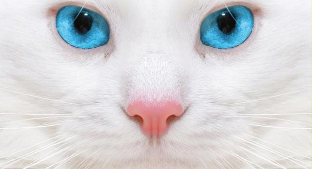 Conoce la espiritualidad de los gatos