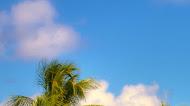 Tropical Beach Resort Mobile Wallpaper