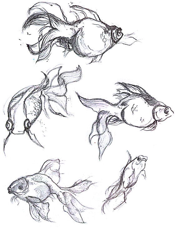 fishes drawing - photo #40
