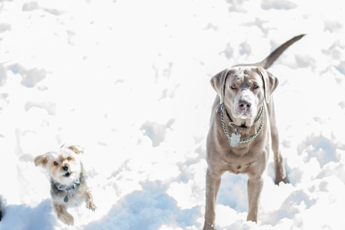 Meet the pups