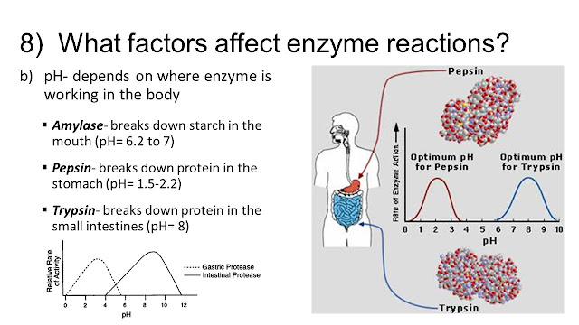 factors that affect enzyme reaction rate Concentration & rate factors lab answers concentration and how it affects the rate of reaction effects of substrate concentration on enzymes in proteins.