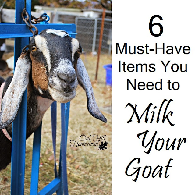 Six must-have items you need to successfully milk a goat.