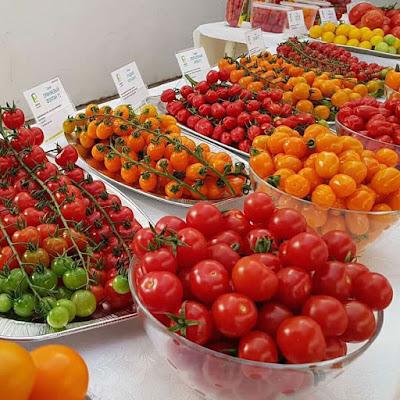 ciri buah tomat yang baik