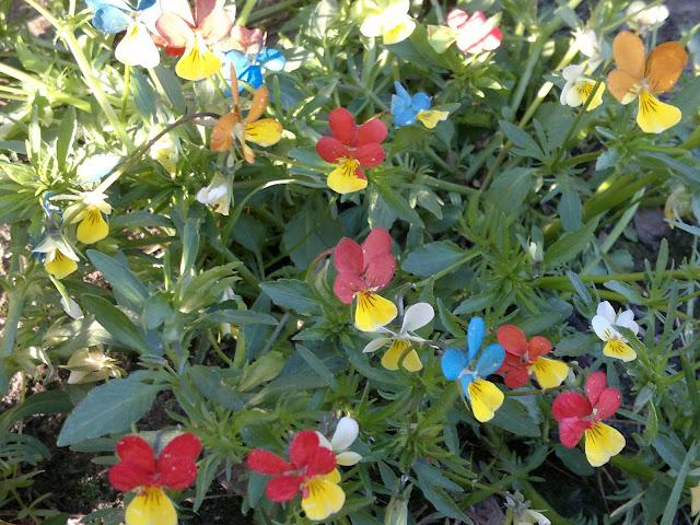 Malowane kwiatki bratki