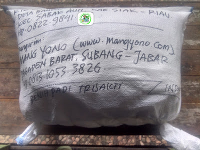 Benih Pesanan RIZKI Siak, Riau. (Setelah packing)