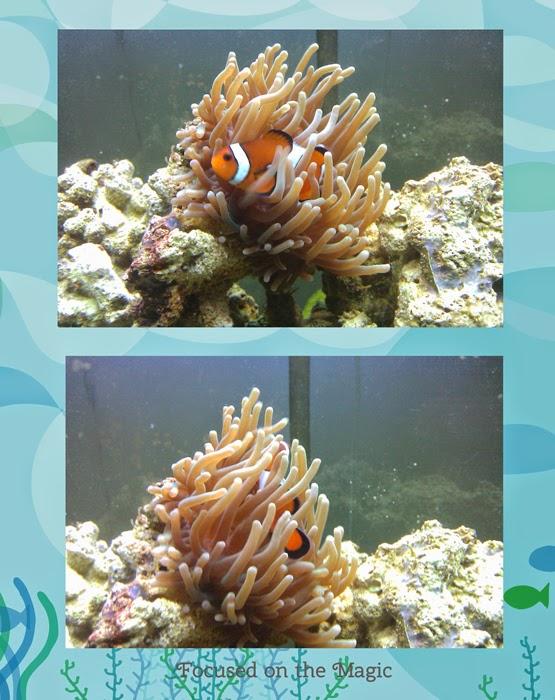 PetSmart Disney Ornaments Clown Fish