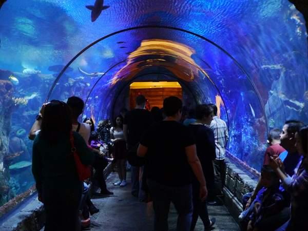 The Shark Reef Aquarium, Mandalay, Las Vegas in Hindi