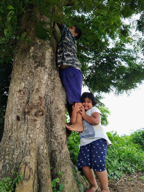 Tree childhood memories