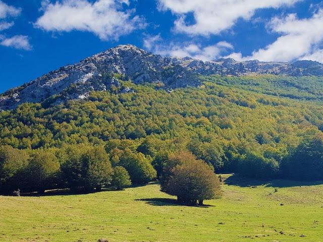 Montagne con alberi