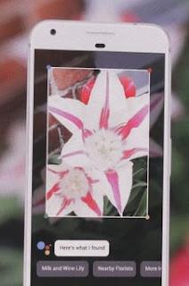 o que é Google Lens? Ilustração sendo usado para buscar informações sobre flores
