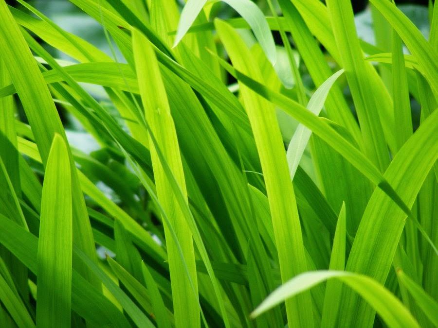 Green grass, suntrap, natural