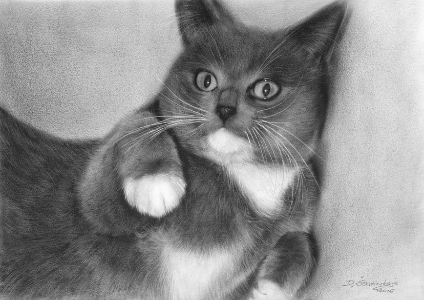 09-Grey-Danguole-Serstinskaja-Paintings-of-Cats-that-look-like-Photographs