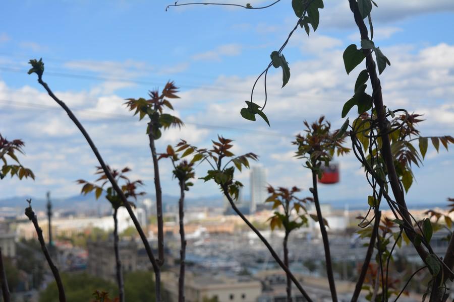 vue sur Barcelone depuis les jardins de Montjuic