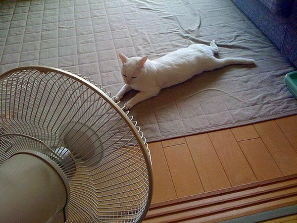 Resultado de imagen para gatos calor