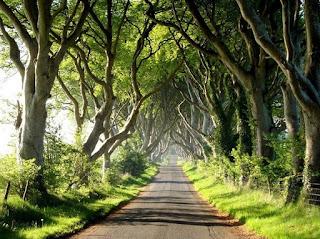 Буковата алея в Ирландия