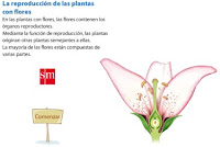 http://www.primaria.librosvivos.net/archivosCMS/3/3/16/usuarios/103294/9/reproduccion_plantas_flores/reproduccion_plantas_flores.swf