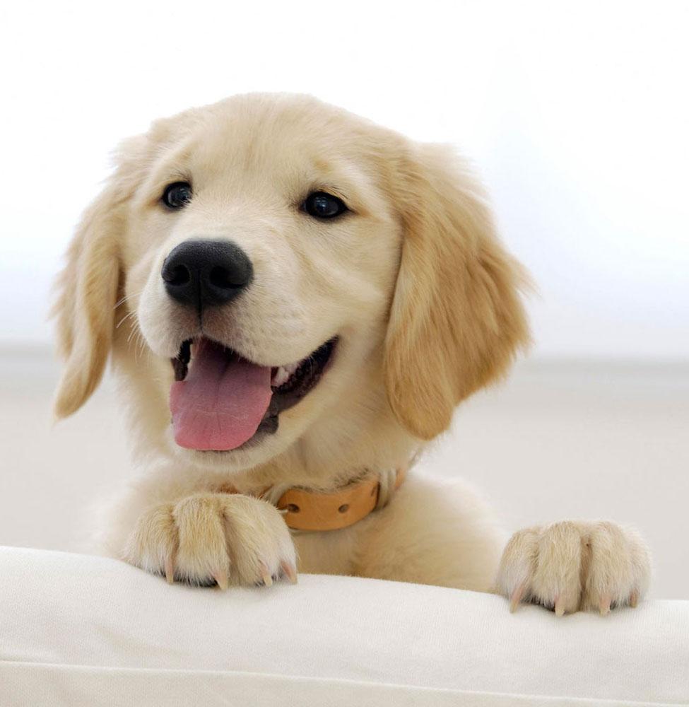 polifagia diagnosi differenziale e perdita di peso del cane