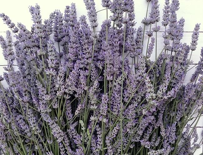 lazy daisy jones August Lavender