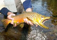 Utah Balık Malzemeleri Dükkanları