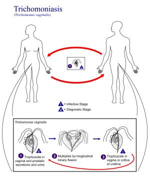 10 Penyakit Berbahaya Akibat Pengamalan Seks Bebas