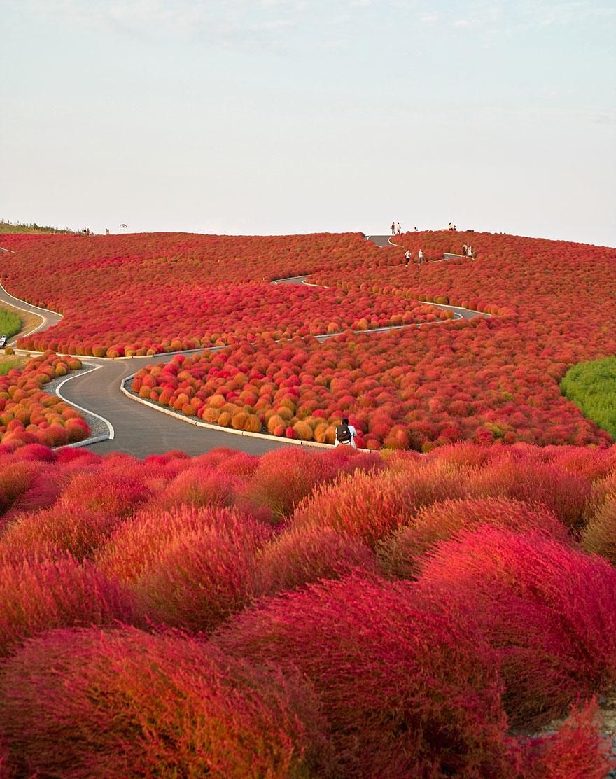 autumn-photography-1