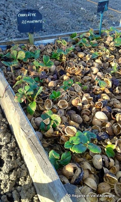 Paillage de coques de noix