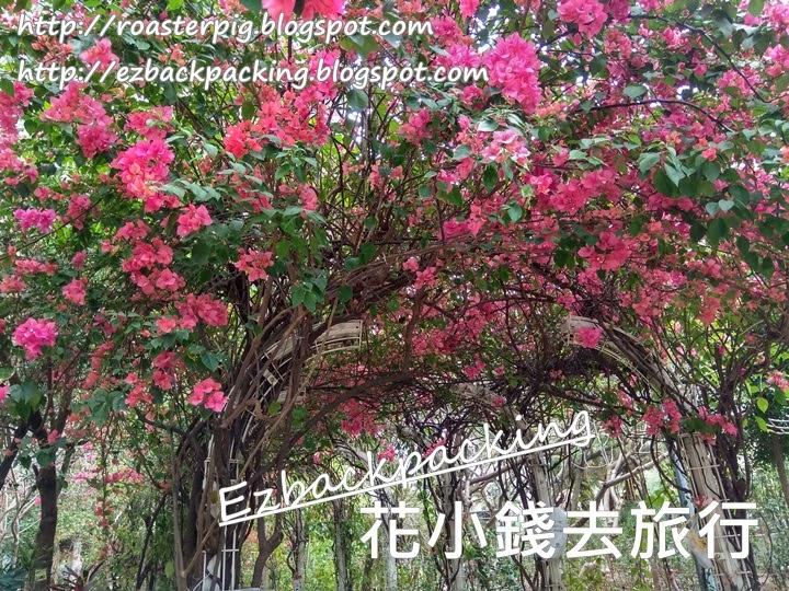 元州邨賞花