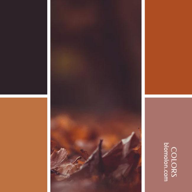 variedad_en_color_combinacion_27