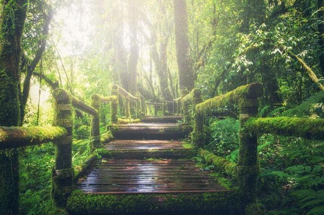 Exploring the rainforest in Peru