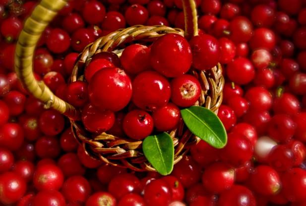 Aneka Manfaat Buah Lingonberry untuk Kesehatan