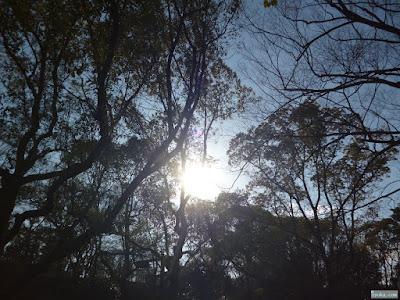 木々と太陽
