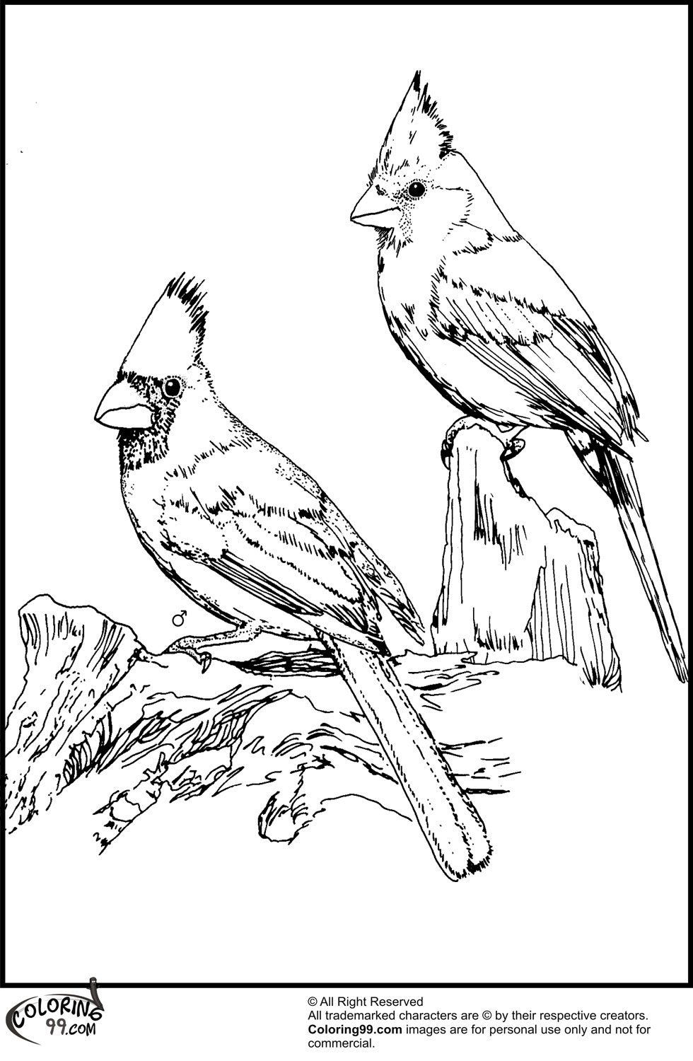 cardinals coloring pages with multiplication | American Cardinal Coloring Pages | Team colors